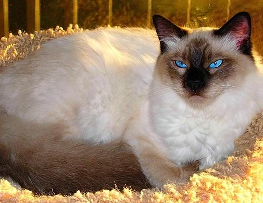 whiskas cat treats