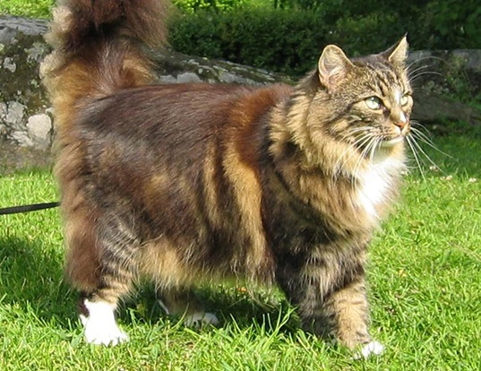 Picture of a norwegian forest