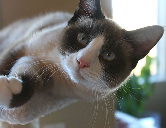 Picture of a snowshoe