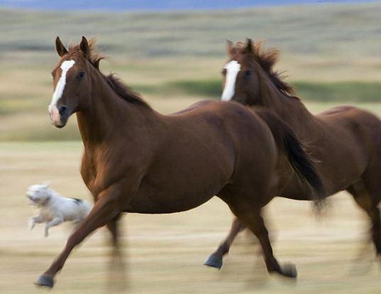 Picture of a horse (Equus caballus)