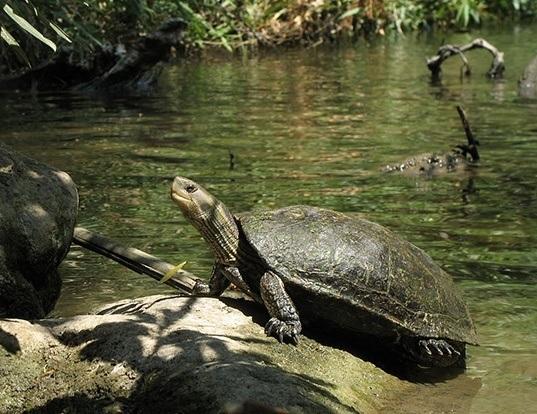 Tortoise Life Expectancy