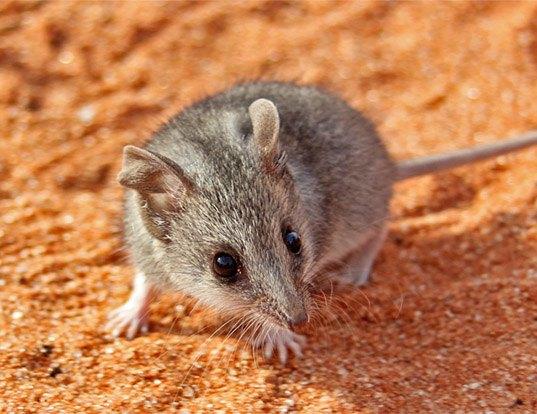 Image Result For Life Expectancy Hedgehog