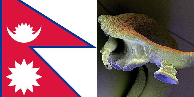 papilloma in fondo alla lingua bacterie jambe